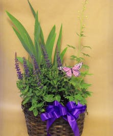 Assorted Perennial Plants