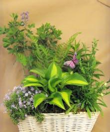 Assorted Perennials in a basket