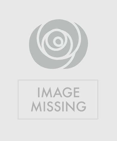 rainbow colored arrangement