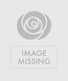 Planting  & Design Fees