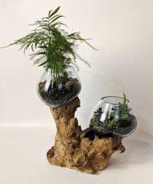 Driftwood Terrarium
