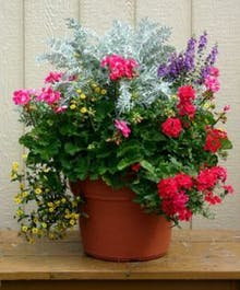 Summer Annual Garden Pot