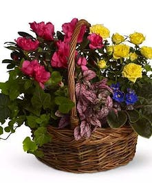 Long-lasting collection of mixed plants in a basket.