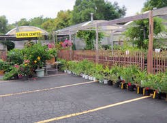 Plants, bushes and trees on display around our Garden Center