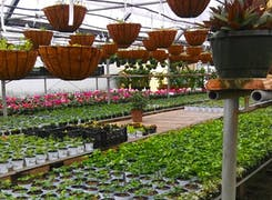 Outdoor flowers and plants on display in our spacious greenhouse